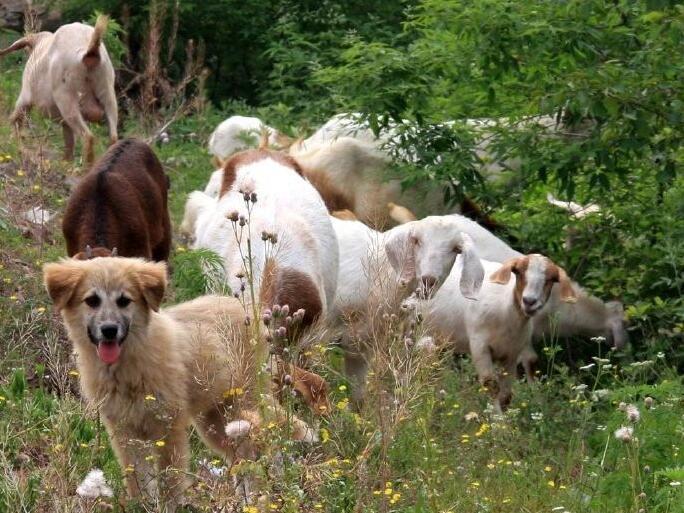 小狗、小羊和那些木兰花