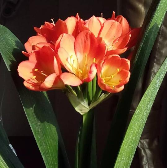 花儿为什么这样艳?