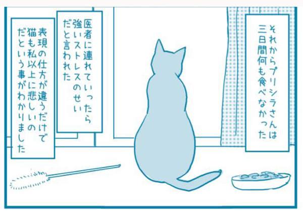 一度认为没有悲伤情绪的猫咪 失去同伴后表现的让人更心疼