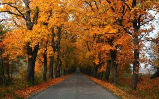 在诗歌里感受立秋
