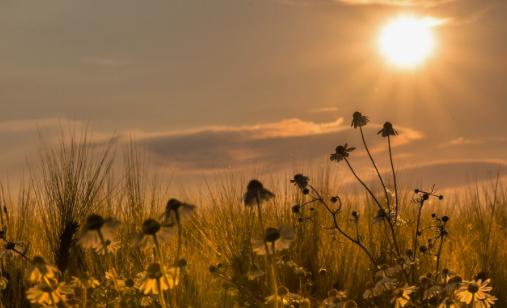 在夏日黄昏里呼吸
