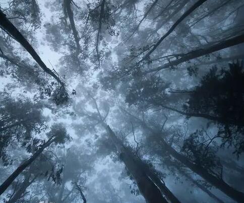 我已经爱上了这片森林