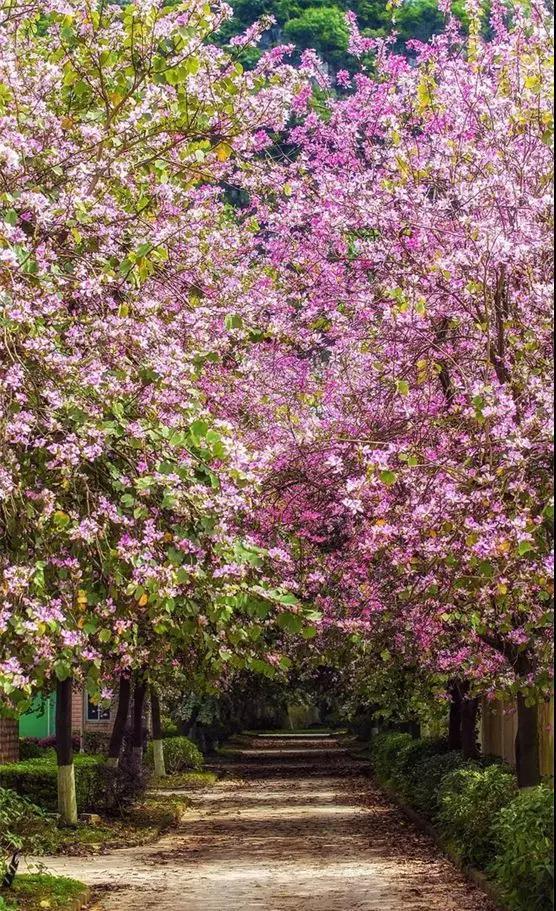 这座城市就会开满鲜花